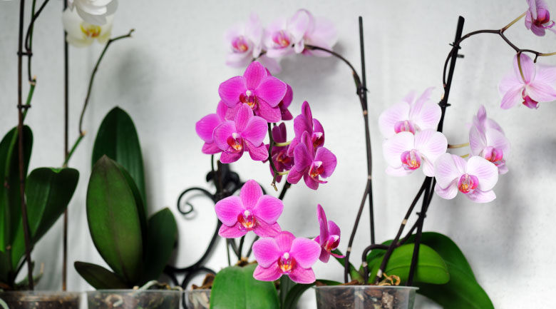 febbraio-pianteinvaso
