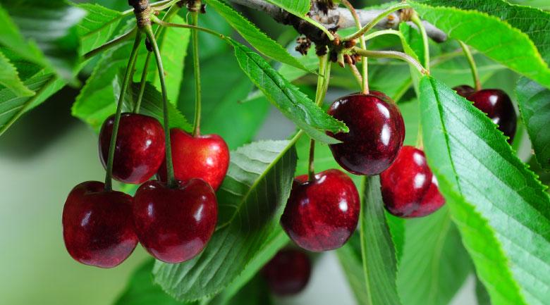 maggio-frutteto