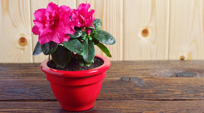 gennaio-fiorivaso