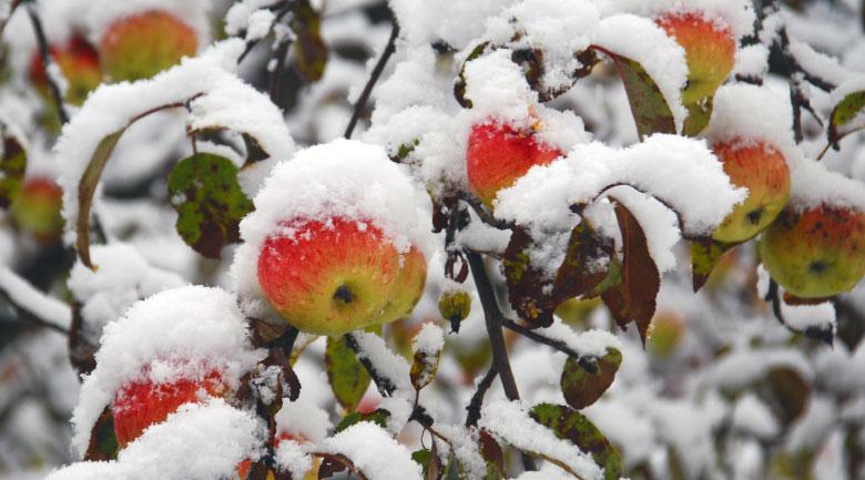 gennaio-frutteto