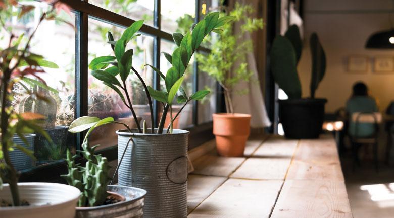 gennaio-piante