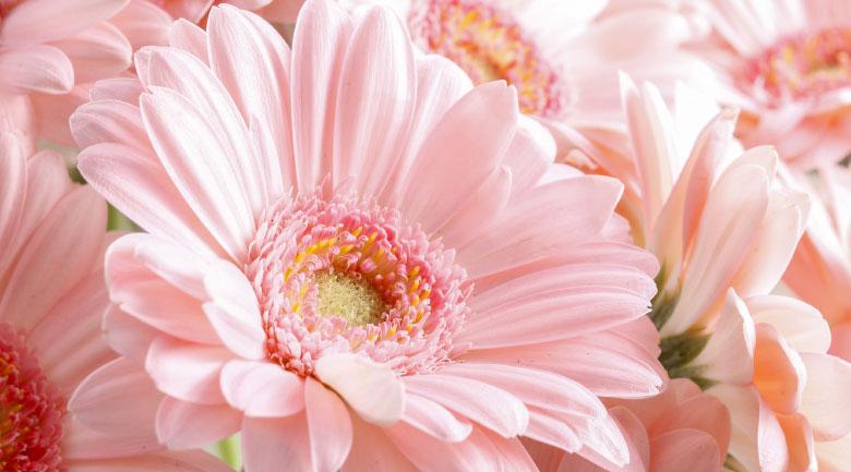 giugno-fiori
