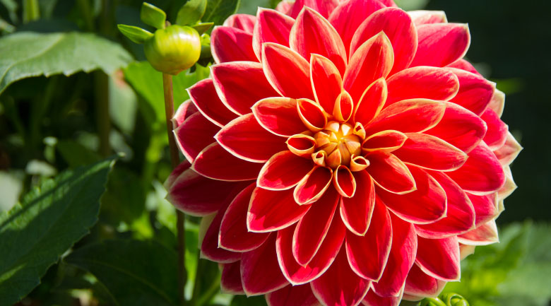 settembre-fiorivaso
